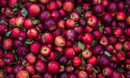 20 trucs simples pour diminuer le gaspillage alimentaire à la maison